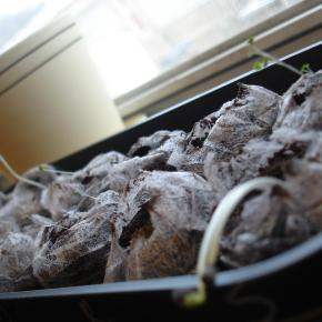 Growing Something New: My Little IndoorGarden